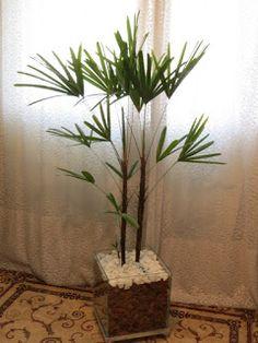 Palmeira ráfia e vaso de polietileno ~ .