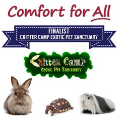 Comfort for All Finalist Critter Camp Exotic Pet Sanctuary