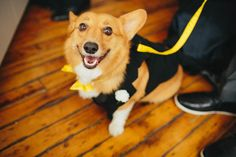 A Doggy Ringbearer, A Slimed Wedding Cake & An Epic Dance Party: Jen & Nick