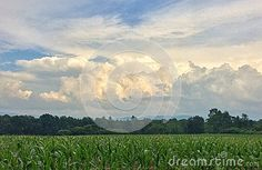 A majestic image of a summer storm rolling in off the green mountains of Vermont in the agricultural Champlain valley with a young crop of corn in the foreground. Green Mountains Vermont, Image Roll, Stock Photos, Summer, Outdoor, Outdoors, Summer Time, Outdoor Games, The Great Outdoors
