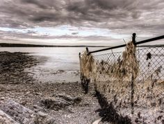 Weed covered fence at low tide.