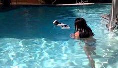 Shih Tzu puppy 1st time swimming