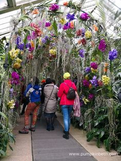 Colourful orchids known as Vandas adorn an immersive tunnel leading out of the temperate orchid zone at the 2018 Orchid Festival, at the Royal Botanic Gardens, Kew.