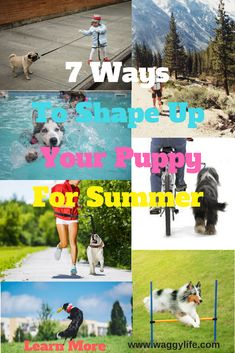 100 Best Waggylife Blog images | Dogs, Hiking dogs, Group of ...