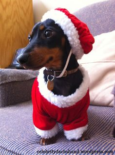 My Christmas List – Crusoe the Celebrity Dachshund http://www.celebritydachshund.com/2011/12/07/dachshund-christmas-list/