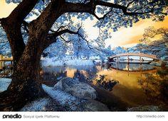 İnfrared (Kızıl Ötesi) Fotoğrafların 35 Güzel Örneği