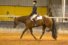 GF Cattle Camp Kid (JVQ Perpetually Akid x Metaxa Easy Winner) Hunter Under Saddle, Western Pleasure, Horse Pictures, Showgirls, Cattle, Westerns, Camping, Kid, Horses