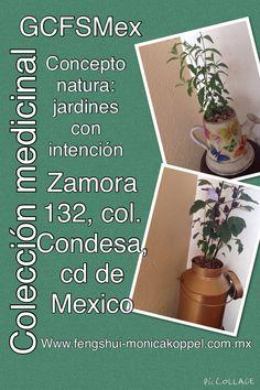GCFeng Shui Mex: concepto natura.....jardines con intención, #sensaciones #emociones #asociaciones #significados concepto y diseño: Monica Koppel www.fengshui-monicakoppel.com.mx