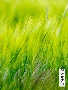 Bild: Tapeten - Green 2