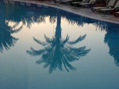 Palme im Pool http://ift.tt/1hHcQQH