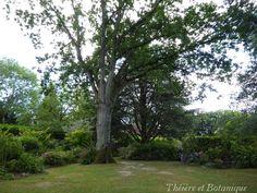 Ombre et Lumière dans les Jardins de la Mansonière - Théière et Botanique
