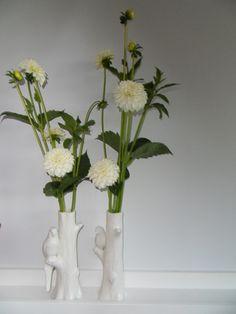 witte dhalias