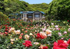 Image from http://www.kamakurabungaku.com/about/imgs/4_008.jpg.