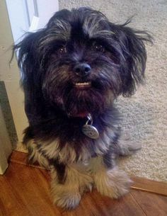 Flynn the Yorkie Mix, hope he's not gritting those teeth!!!