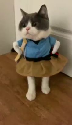 Top 20 Funny animals about Cats Funny Animal Videos, Funny Animal Pictures, Cute Funny Animals, Cute Baby Animals, Funny Cats, Videos Funny, Cute Kittens, Cats And Kittens, Dancing Cat