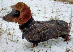 Daschund in camo & hat.... I want this outfit for copper !!!!!