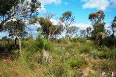Alexander Heights, West Australia. bush reserve
