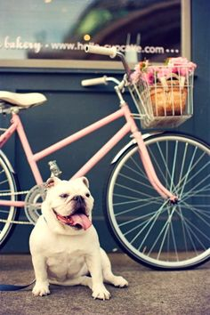 bike n bulldog = perfect combo