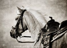 Horse Photography Black and white horse by stephaniemoon on Etsy, $25.00