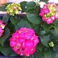 Punschkekse - Rezept | GuteKueche.at Anna, Flowers, Plants, Tiramisu Recipe, Biscuits, Quick Cake, Food Coloring, Punch, Planters
