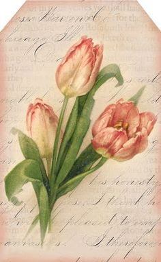 Pink tulip tag ~ light pink background, 2.5 x 4 inches.