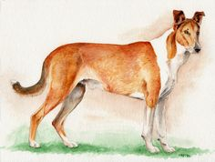 Original Watercolor Painting  Smooth Collie by LivieLightyear, $100.00