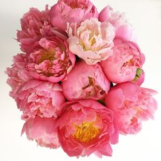 Quick Tips on maximizing the life of cut peonies Fresh Flowers, Beautiful Flowers, Send Flowers, Cut Flowers, Flower Garden Design, Flower Gardening, Flowers Garden, Growing Peonies, Different Plants