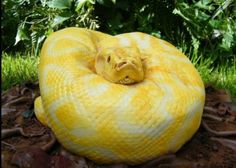 SO--it's actually a cake!!!!! Showed this to my daughter who is deathly afraid of snakes and she was about to cry Way too funny I might have to try and make this for her next birthday. LOL