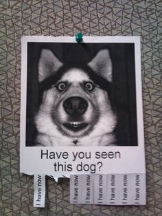 19 Humorous lost pet signs | Mommy Has A Potty MouthMommy Has A Potty Mouth