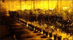 Самая большая лаборатория по производству наркотиков