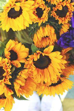 sunflowers // silverlake farmers' market