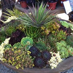 -succulent garden. James has a great one going in his backyard.