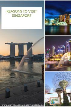Singapore Top 10 Tours & Activities (with Photos) - Things to Do in Singapore, Singapore Singapore City, Visit Singapore, Underwater Creatures, Underwater World, Activities In Singapore, Great Places, Places To Go, Singapore Botanic Gardens, India Tour