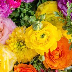 Ranunculus Garden Fine Art Photography – april bern photography