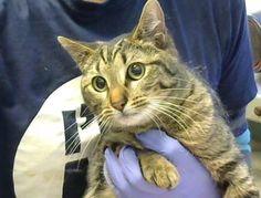 Neo - URGENT - Dekalb County Animal Shelter in Decatur, Georgia - ADOPT OR…