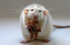 ...yes I like rats :) but only ones with teddy bears.