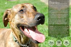 Learn more about Stanley and our other 2012 Furry Tail Endings at the 5th Annual LAPS Fall Gala on Nov. 3rd 2012!          Langley Animal Protection Society:  http://lapsbc.ca    Gala Details:   https://www.facebook.com/photo.php?fbid=478586708838433=pb.155480244482416.-2207520000.1350595782=1    #dog #puppy #rescue #langley #fraservalley