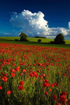 Before the storm - Magic poppy, Jura, Poland