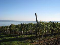 Balaton (2010) Vineyard, Seasons, Wine, Mountains, Nature, Travel, Outdoor, Outdoors, Naturaleza
