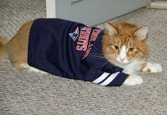 Magoo, the #Patriots fan!