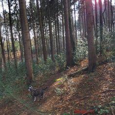 "Der Schnee ist wieder weg 7.3.2016 #iphone6sphotography #hollygo #hollyismydog #bulldog #oldenglishbulldog #lovebulldog #sprockhövel #sprockhövellove #Ruhrgebiet #love_ruhrgebiet #wald#nature #naturelovers #sunshine #forest#tree#ig_nrw #loves_united_trees #ichliebewetter #märz2016 #bulldoglover #instanature #instabulldog #hundeliebe #instadog by molto_11 Follow ""DIY iPhone 6/ 6S Cases/ Covers/ Sleeves"" board on @cutephonecases http://ift.tt/1OCqEuZ to see more ways to add text add…"