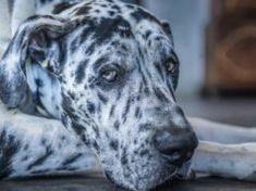 6 Ways to Prevent and Treat Gastric Dilatation Volvulus (Dog Bloat) Tick Removal Dog, Dog Kennel Designs, Dog Dna Test, Dog Food Bowls, Pet Remembrance, Dog Died, Group Of Dogs, Dog Feeder, Irish Setter