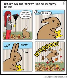 #rabbit #bunny #bunnies #diet