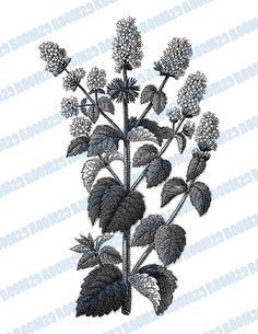 INSTANT DOWNLOAD Mint Flowers Vintage Illustration by room29