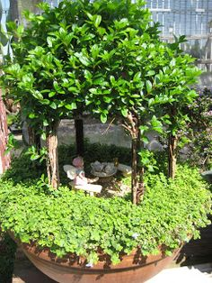 Kind of a miniature-miniature fairy garden - just a saucer with an arbor, looks like a planted climbing plant trained tightly to the arbor frame, and a layer of greenery underfoot for the fairies - this is super-cute by itself  ***********************************************   GossamerCreations -