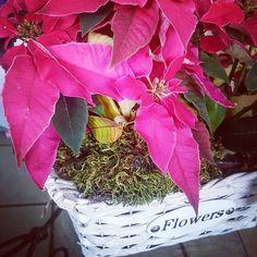 Think (Beyouty) Pink! Grazie Pasquale&Stefania Carrella per il bellissimo omaggio  #beyouty #piacerticomesei #flowers #gifts #fucsiaworld #picoftheday #follow4follow #thanks #fiori #star