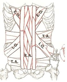 E.O. I.O. TVA, R.A., When these muscles can contract effectively, they can stabilize, control, move, and steer you in any potential direction. When these contractions are combined with your intra-abdominal and intra-thoracic contents, your trunk can become a pretty stiff structure. #getyourbodyright #externaloblique #internaloblique #transversusabdominis #rectusabdominis #tva #core