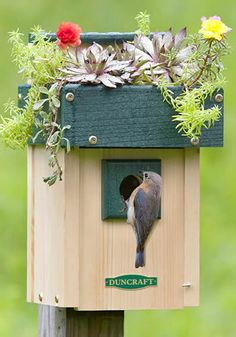 Blooming Birdhouse Planter Enjoy beautiful flowers and beautiful birds! Our unique bird house has a planter on top so you can plant your choice of lovely flowers. Our house is made of recycled plastic which is impervious to moisture so you can water as much as you want and never cause damage. And potting soil will never stain it! Flower box top is 2-1/2 inches deep. This house measures 6-1/4 x 8 x 8-1/3 inches. Item: 4276 Price:$69.95 Sale:$59.95