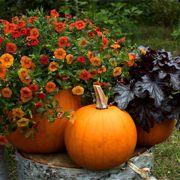 To do for 2015 season: Grow Pumpkins in Containers with These 11 Tips