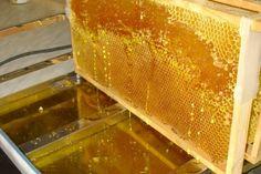 Wie man Honig selbst imkern kann, erklärt uns Petra vom Bienenkörble